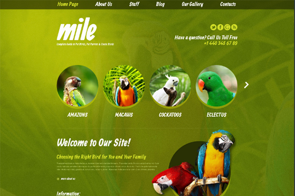 Exotic Birds Blog